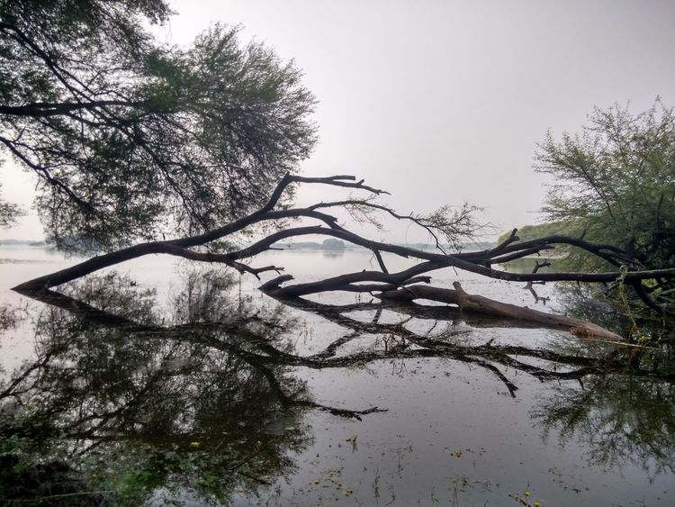 Tree Branch Nature Water Outdoors Sky Day Mi3photography Mobile Photography Reflection Nature