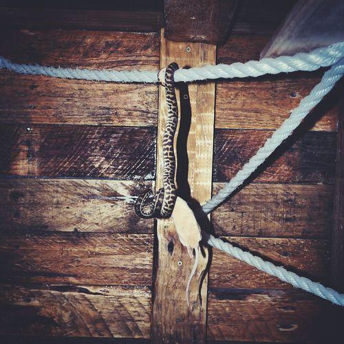 Close-up of metal hanging on wood