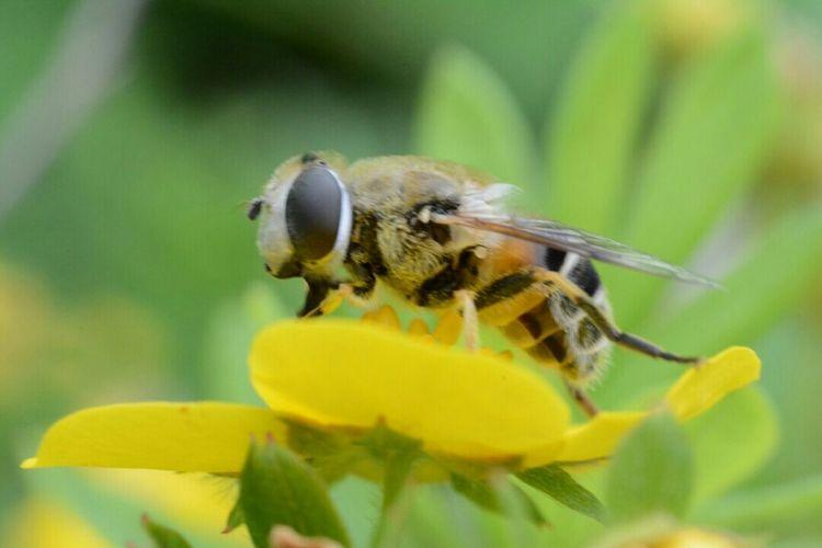 A bee on a flower! First Eyeem Photo