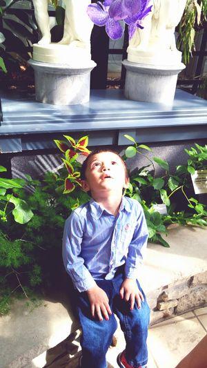 Lifestyles People Flower Nature Lightplay Flower Head Babyboy Portrait Childhood Full Length