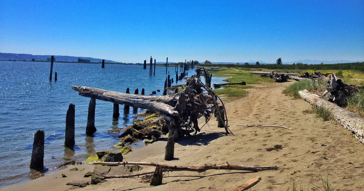 Clear Sky Nature Scenics Tranquility Water Day Tranquil Scene Blue Outdoors Wooden Post Wood - Material Sand Sunlight Beach No People Sea Beauty In Nature Sky Jetty Island Puget Sound PNW