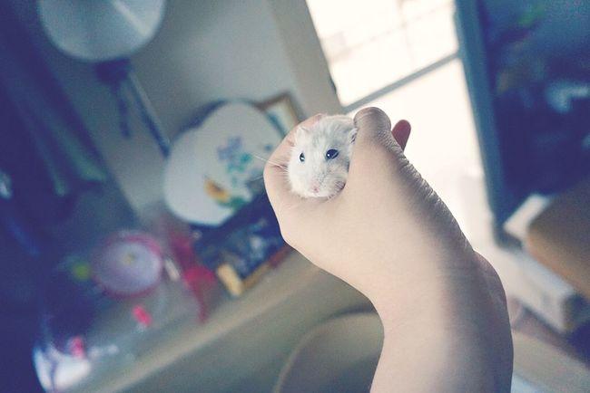 Hamster My Hamster Hamster Love
