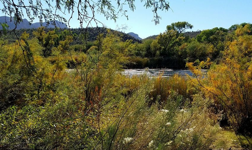 I have always preferred to be exploring beautiful uncommercial pockets of loveliness on this Earth. My soul is happiest when i can connect ❤❤❤ Salt River Autumn Lazy Day Beautiful Sparking Day