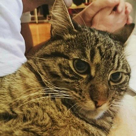 A harag napja Angrycat Charliethecat Karcsika Catstagram Catsofinstagram Mik