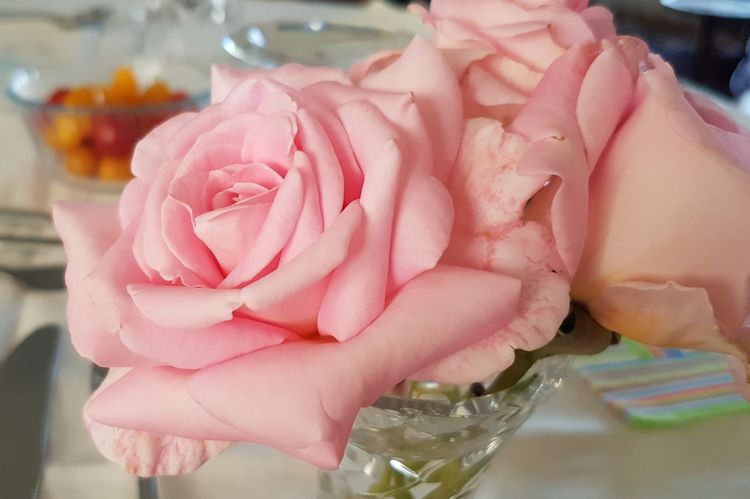 Pink roses... Creation Of God ! Delicate Beauty Amazing Design Pink Color Indoors  Close-up Food Flower Beauty In Nature Fragility Rose - Flower Freshness Petal Flower Head