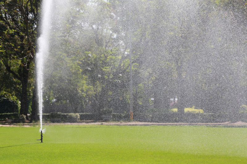 Sprinkler in Watering green lawn of golf courses in the morning. Sprinkler In Grass Watering Plants Activity Day Environment Golf Golf Course Grass Green - Golf Course Green Color Land Lawn Leisure Activity Nature No People Outdoors Plant Rain Sport Spraying Sprinkler Sprinkler System Tree Water Watering