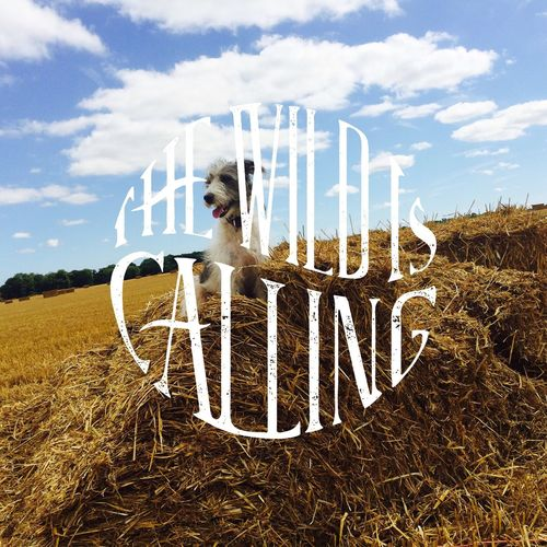 The Wild Is Calling Dog Countryside Beauty In Dogs Beauty In Nature Suffolk, United Kingdom