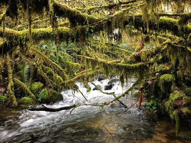 Oregon Green Nature Stream Hiking Adventure