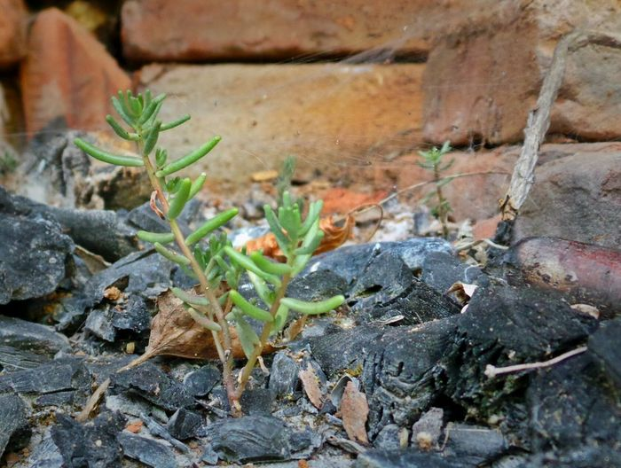 From The Ashes New Life Hope Nature Finds A Way Phoenix Birth Of A Metaphor Macro Nature Close Up Nature
