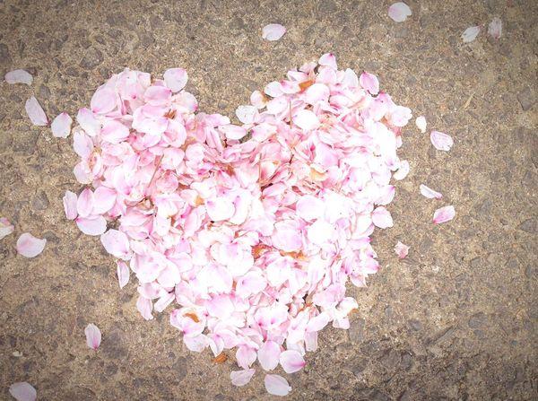 サクラの花びらで ハート❤ 撮り方 むつかしいにゃ(´×ω×`) 今日も おちゅかれさま(≧◡≦) サクラ 桜 笑顔 キミに届け Heart Love Smile Happiness Natural Beauty Spring Flowers Thank You Today