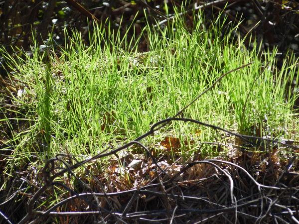 Hello World Newlife Natgeolandscape Naturelovers Nature Photography NaturalBeauty Natgeotravellerindia