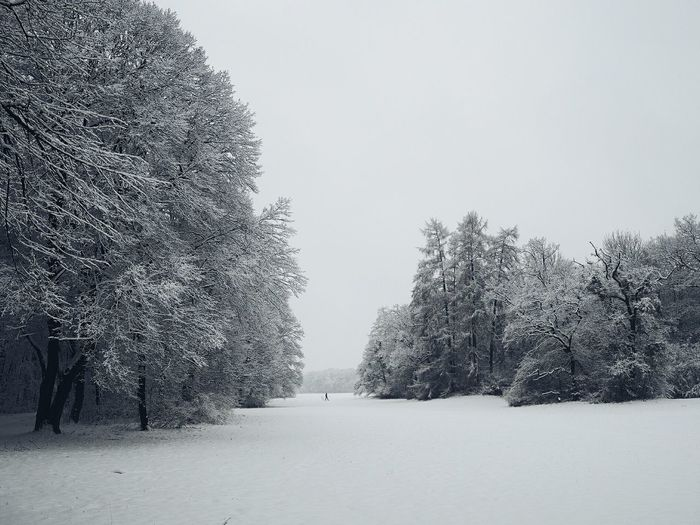 A walk in the park. Munich, Bavaria, Germany. snow covered. Happiness Cold Temperature Snow Covered Winter Winter Wonderland Winter Trees Winterwalk Munich Muenchen Snow Winter Cold Temperature Tree Outdoors Forest No People Tree Area Nature