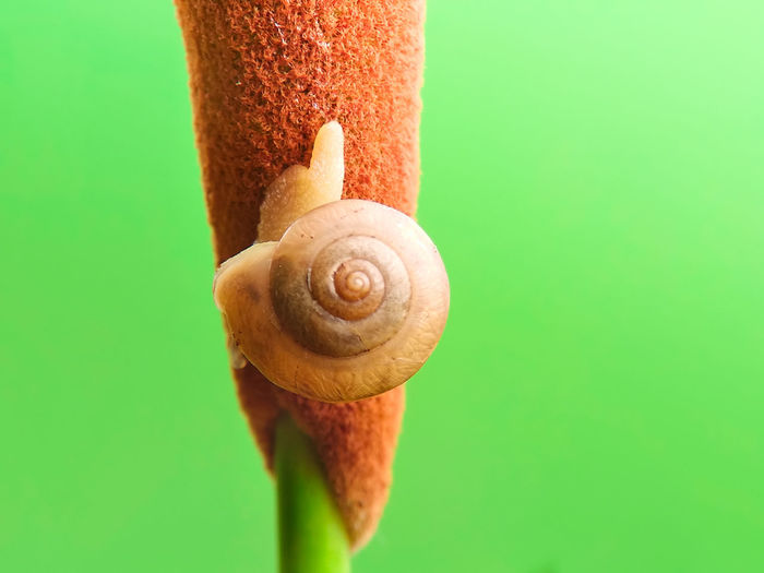 snail, snail on the branch with a green background Spiral Brown Gastropod Snail Close-up Animal Themes Green Color Animal Shell Grasshopper Animal Antenna Invertebrate Crawling Slug Mollusk Tortoise Shell Hermit Crab Beetle Slimy Butterfly - Insect Slow Moth Arthropod Insect Seashell Ladybug Praying Mantis Caterpillar