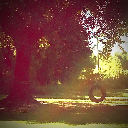 North Carolina Summer Tire Swing Nature Outdoors Southern Summers Sky Tree Tranquility No People Day Pinaceae Water Beauty In Nature Grass Scenics Southern Pines First Eyeem Photo