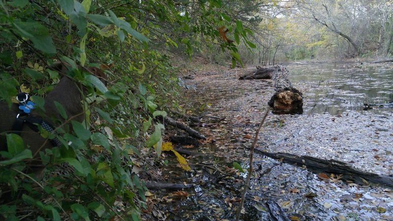 """Squirrel-Fish?!"" Bearcreek Bearcreek Nature Preserve Dog DogLove Dogs Dogslife LG G4 Nature Nature Photography Nature Walk Pets Pond Trees Water Wildlife & Nature"