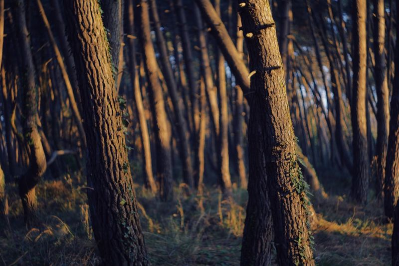 EyeEm Selects Tree Plant Forest Trunk Tree Trunk Land Nature