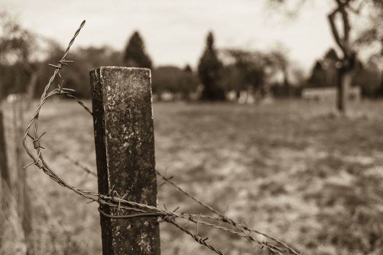 Canon Fd 28, 2.8 Field Nature Plant Post Tree Barb Wire Fence Barrier Bildfolge Dof Focus On Foreground Photogaphy Selective Focus Sepia Vintage Lens Wire Wooden Blade Of Grass Cultivated Land Agricultural Field Farmland Growing Plant Life Stem Fence Goal Post Razor Wire