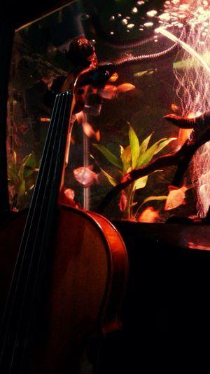 Violin Aquarium