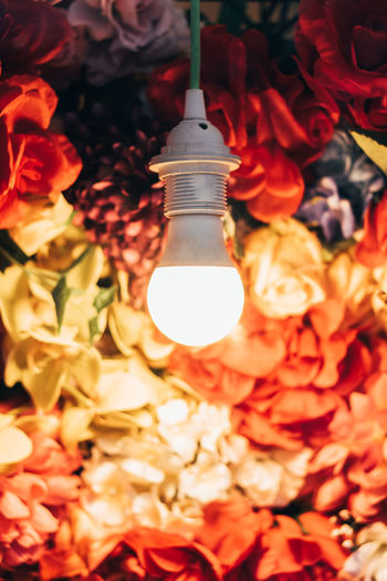 Enchanting shot of a singular light bulb, illuminating a beautiful arrangement of blossoming flowers. Colors Life Perspective Ambient Art Beauty Blossom Close-up depth of field Detail Electricity  Flowers Fragility Hanging Light Illuminated Light Bulb Nature No People Unique Unqiue EyeEmNewHere