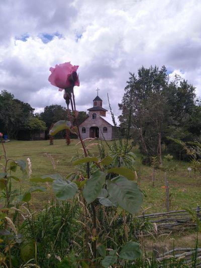 aucar Water Cloud - Sky Sky Watermill Tree No People Flower