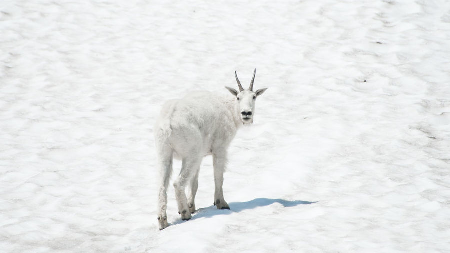 Horse standing on snow field