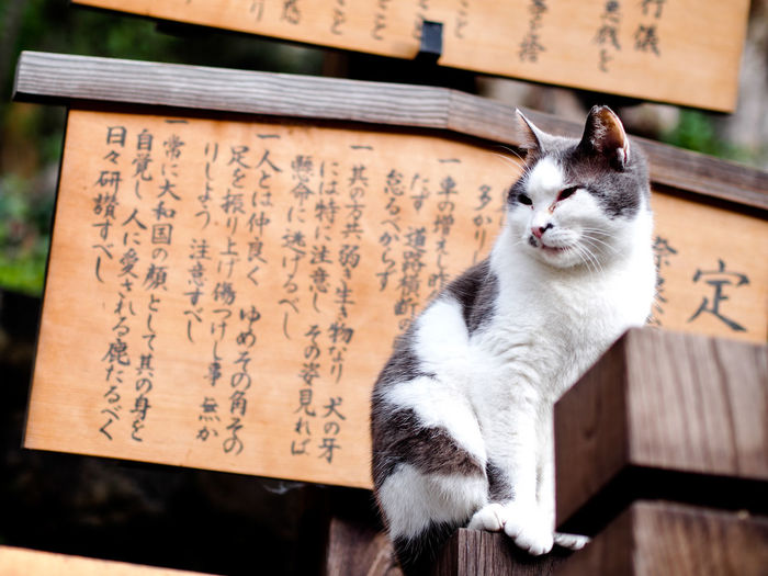 Zen Cat Cat Day Domestic Cat Fat Cat Japanese Cat Mammal No People One Animal Outdoors Peace Pets Temple Zen