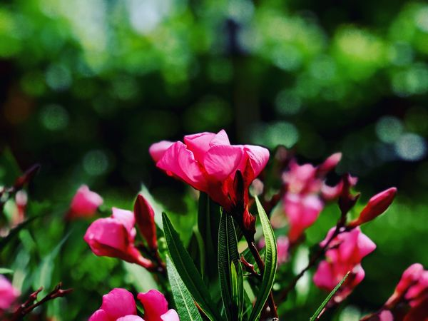 The pink before the green. Flower Nature Beauty In Nature Pink Color Flower Head No People Focus On Foreground Outdoors Day Close-up Plant Perspectives On Nature
