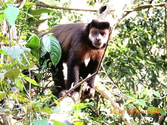 Monkey!!!! Argentina❤