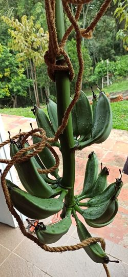 High angle view of succulent plant on tree