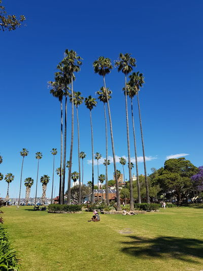 View of palm trees on field against blue sky