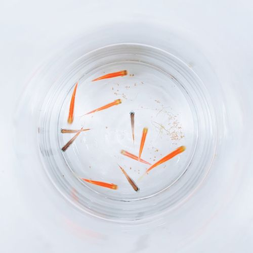 Directly above shot of fish in bowl on table