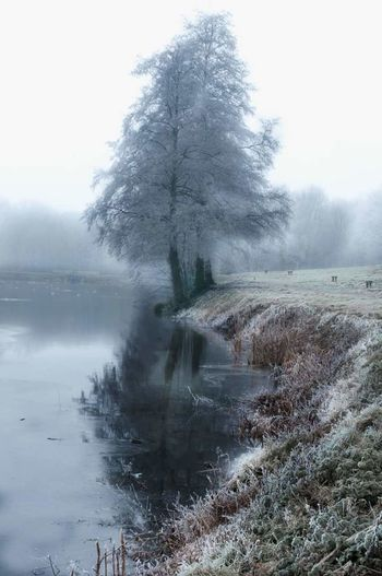 Tree Nature Fog Water Reflection Landscape Outdoors Winter TheWeekOnEyeEM Lake Tranquility Beauty In Nature Cold Temperature France