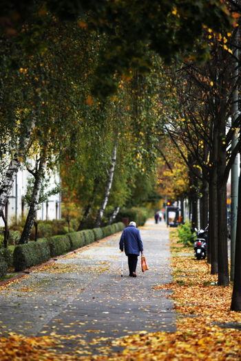 Autumn Beauty In Nature Change Day Footpath Full Length Leaf Nature Old-age Pensioner One Person Outdoors Pensioner People Real People Rear View Retired Person Road Street The Way Forward Tranquility Tree Walking Women
