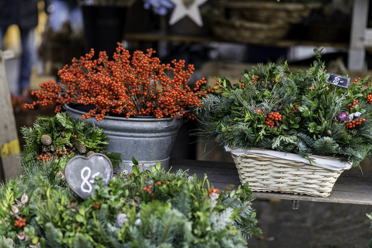 Close-up of flowers in market