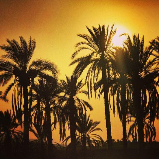 Insiran1 Insiran Instasgreatestshots Igs_photos instamessage ig_captures ig_4every1 igworldclub ig_asia ig_iran instapersia iranianinstagram jj_editors jj_forum jj_daily mafia_naturelove palm trees,