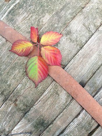 High Angle View Day Fragility Outdoors No People Close-up Nature Leaf Leaf Photography Colours Of Nature Autumn Autumn Leaves Wodden Texture Wodden EyeEmNewHere EyeEm Nature Lover