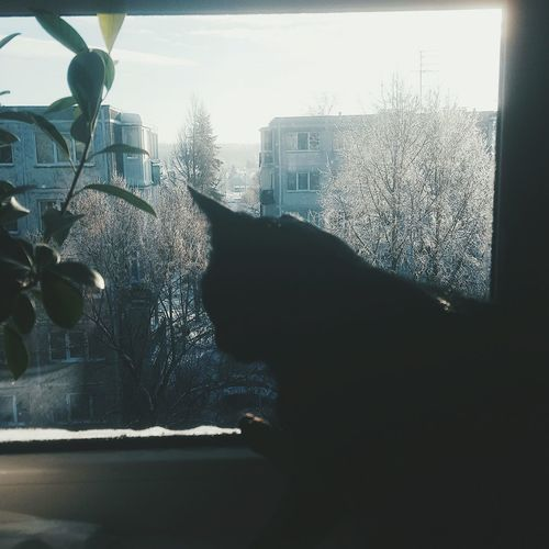 Cat Looking Through Window First Eyeem Photo