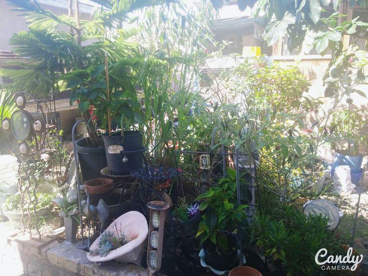 Grandmas Garden ❤