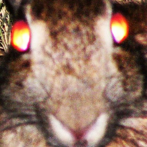 """An """"Evil Demon Bunny"""" edit to creep your friends and family out as your wallpaper😂😂😂😂 Creepy Bunny  Rabbit Creeper Demonbunny Demon Scary Alldayeveryday"""