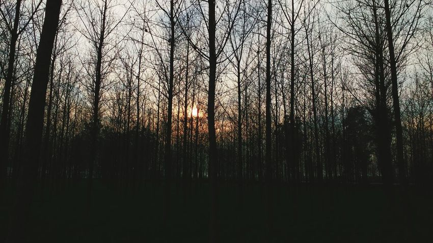 The Week On EyeEm Nature Beauty In Nature Full Frame Sunset_captures Random Shot My Camera Moto Mobile