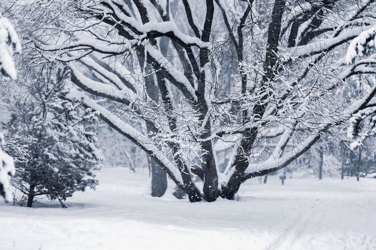 Picturesque bright winter landscape of a forest with different trees covered with snow. Natural background Snow Winter Cold Temperature Land Plant Tree Nature White Color Beauty In Nature No People Environment Tranquil Scene Landscape Covering Scenics - Nature Snowing Tranquility Extreme Weather Non-urban Scene Blizzard Picturesque Covered Forest Outdoors White