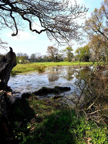 Water Hidden Trees Beautiful Nature No Filter