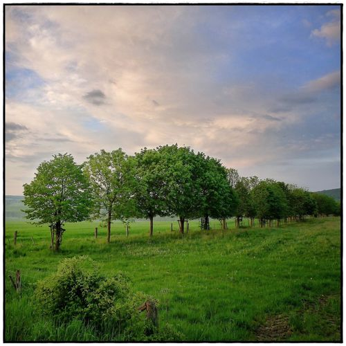 field in the evening light Sundowner Beauty In Nature Field Landscape Lawoe Nature No People Outdoors Sky Tranquility Tree