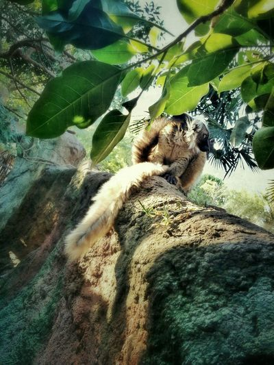 At the Zoo... There is life everywhere!! Life Lemur One With Nature