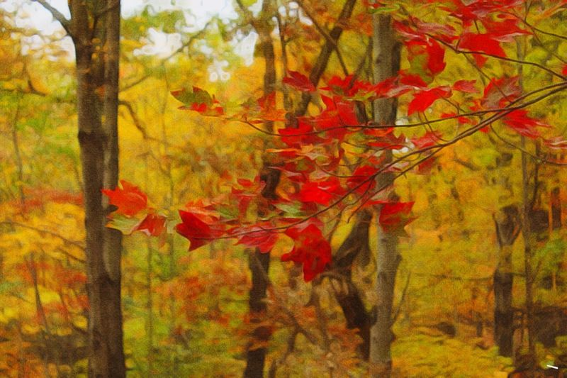 Beauty In Nature Autumn Leaves Red And Gold Paint Edit Photo All About The Color