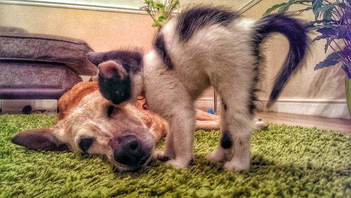 love this picture hope you do too x Catsoneyeem EyeEmbestshot_HDR Fun #instagramers #TagsForLikes #food #smile #pretty #followme #nature #lol #dog #hair #onedirection #sunset Swag Throwbackth [ Cat