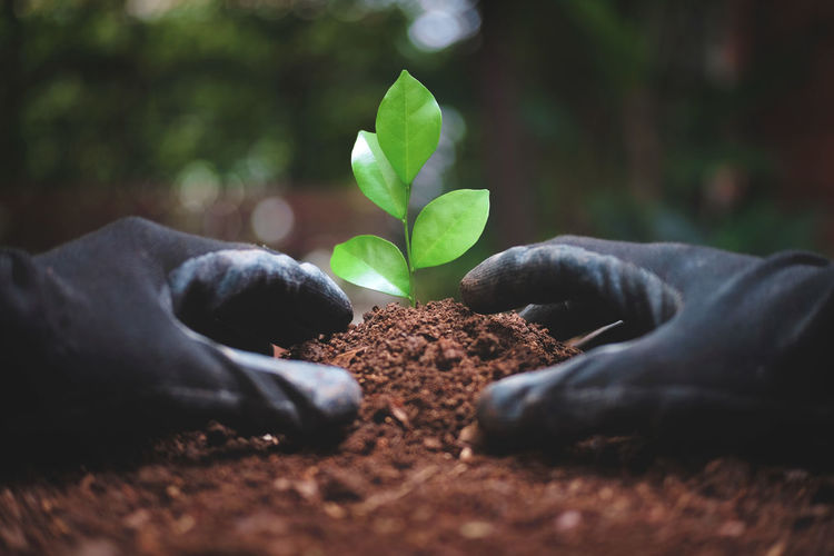 Man in black rubber gloves planting the young plant. Agriculture Soil Closeup Glove Green Plant Growth Ground Growing Green Color Small Hand Leaf Lifestyles Natural Protection Tree Nature Care Environment