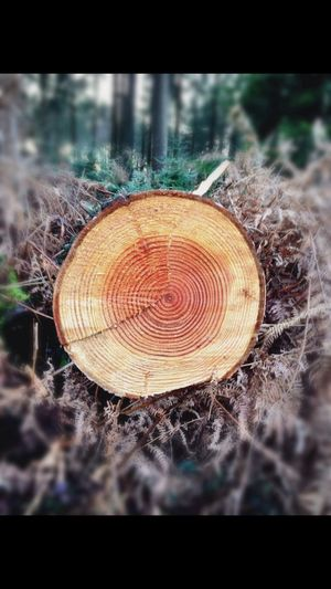 Wood Woods Forestwalk Trees Age Tree Trunks Tree Rings Patterns In Nature Patterns In Wood Beautiful Nature Beautiful Trees Nature EyeEm Nature Lover