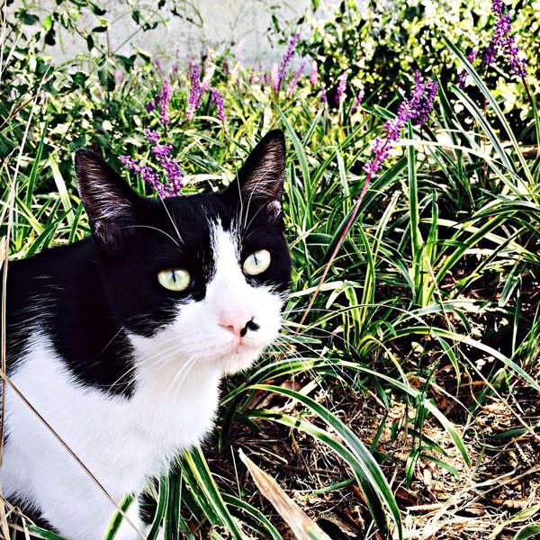 堂島川の猫