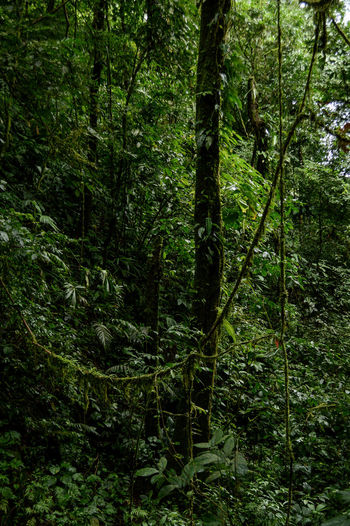 Beauty In Nature Day Forest Growth Jungle Liana Nature No People Outdoors Tranquility Tree